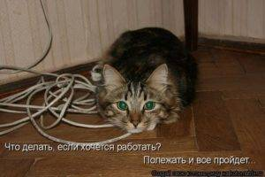 Как моментально отучить кота грызть провода ? уход и воспитание
