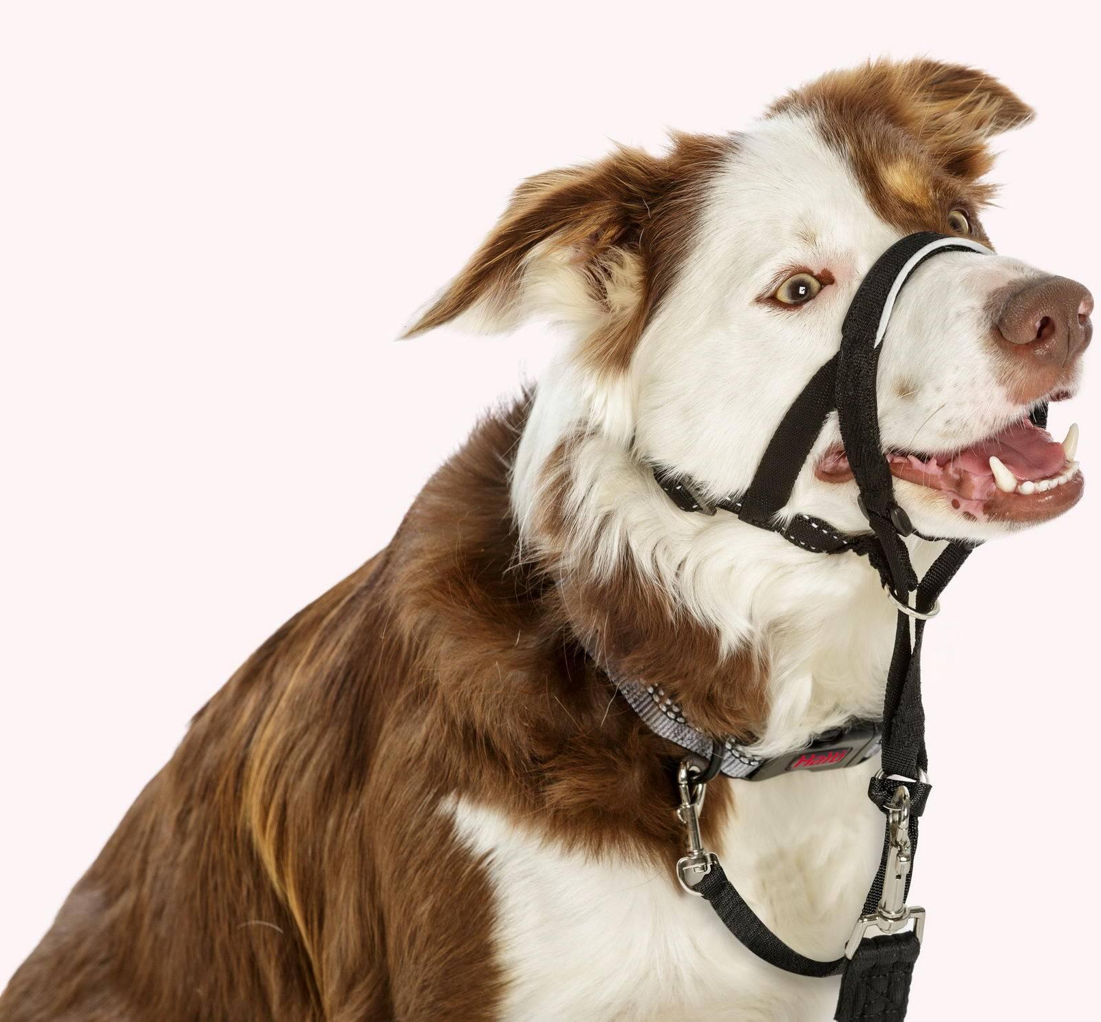 ᐉ недоуздок для собак: что это такое и как сделать своими руками - kcc-zoo.ru