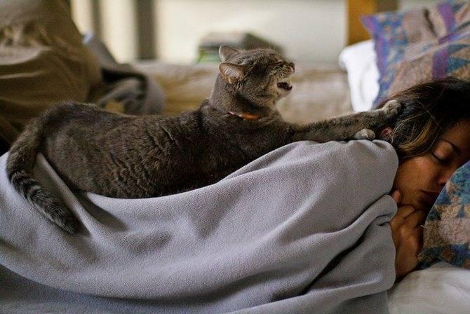 Что будет если не давать кошке спать, почему нельзя будить кошек?
