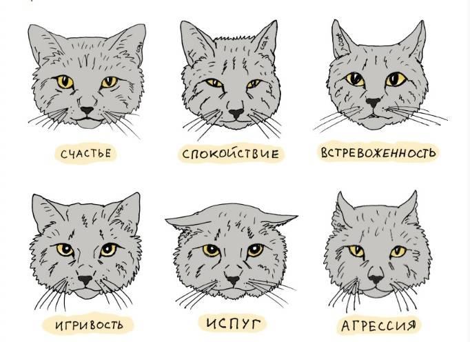 Как определить породу кошки по внешним признакам, шерсти, окрасу