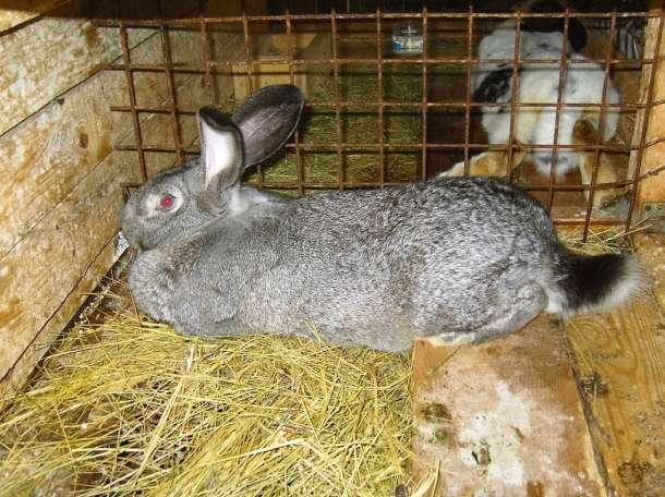 Разведение кроликов в домашних условиях для начинающих — от а до я