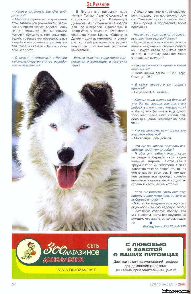 Характеристика собак породы якутская лайка с отзывами и фото
