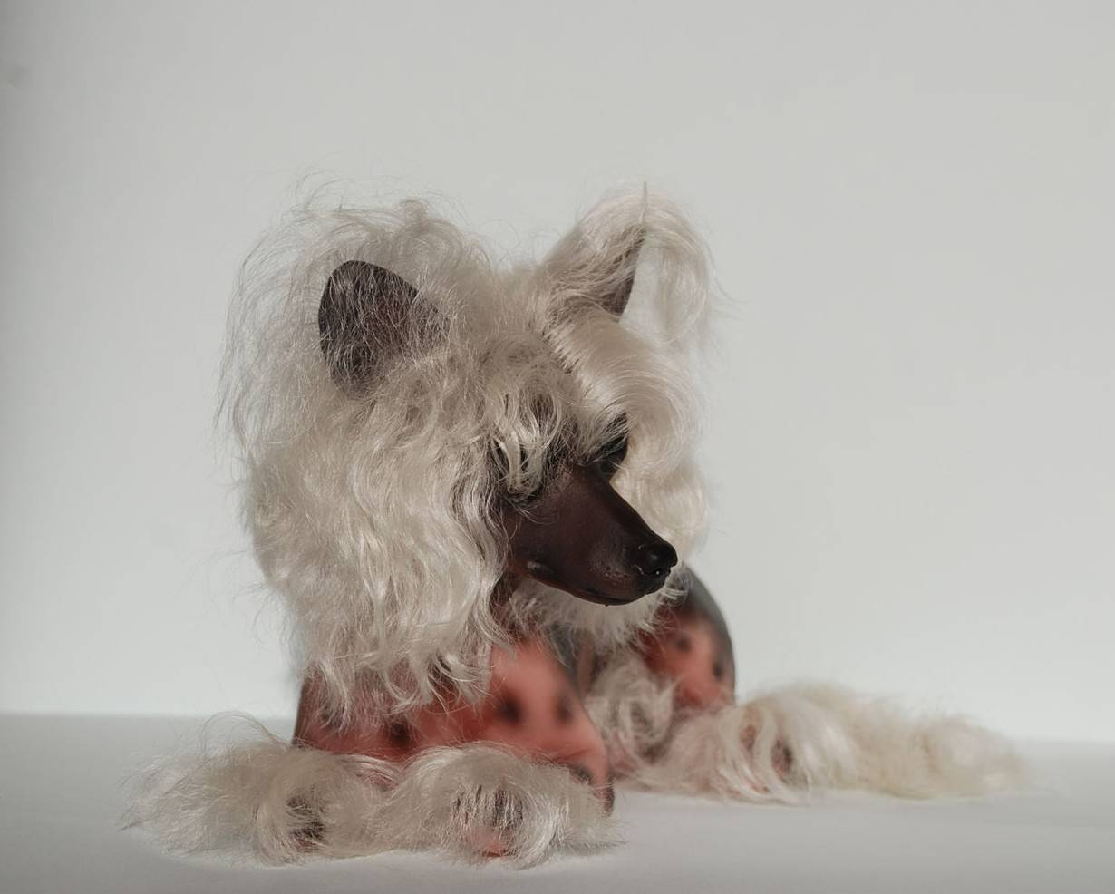 ᐉ описание породы китайская хохлатая собака - ➡ motildazoo.ru