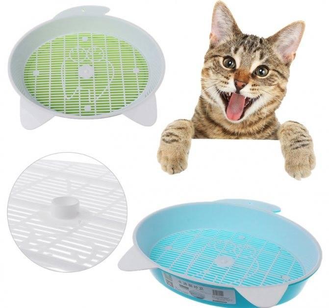 Как приучить кота к унитазу в квартире: ? способы обучения, противопоказания, рекомендации, советы специалистов