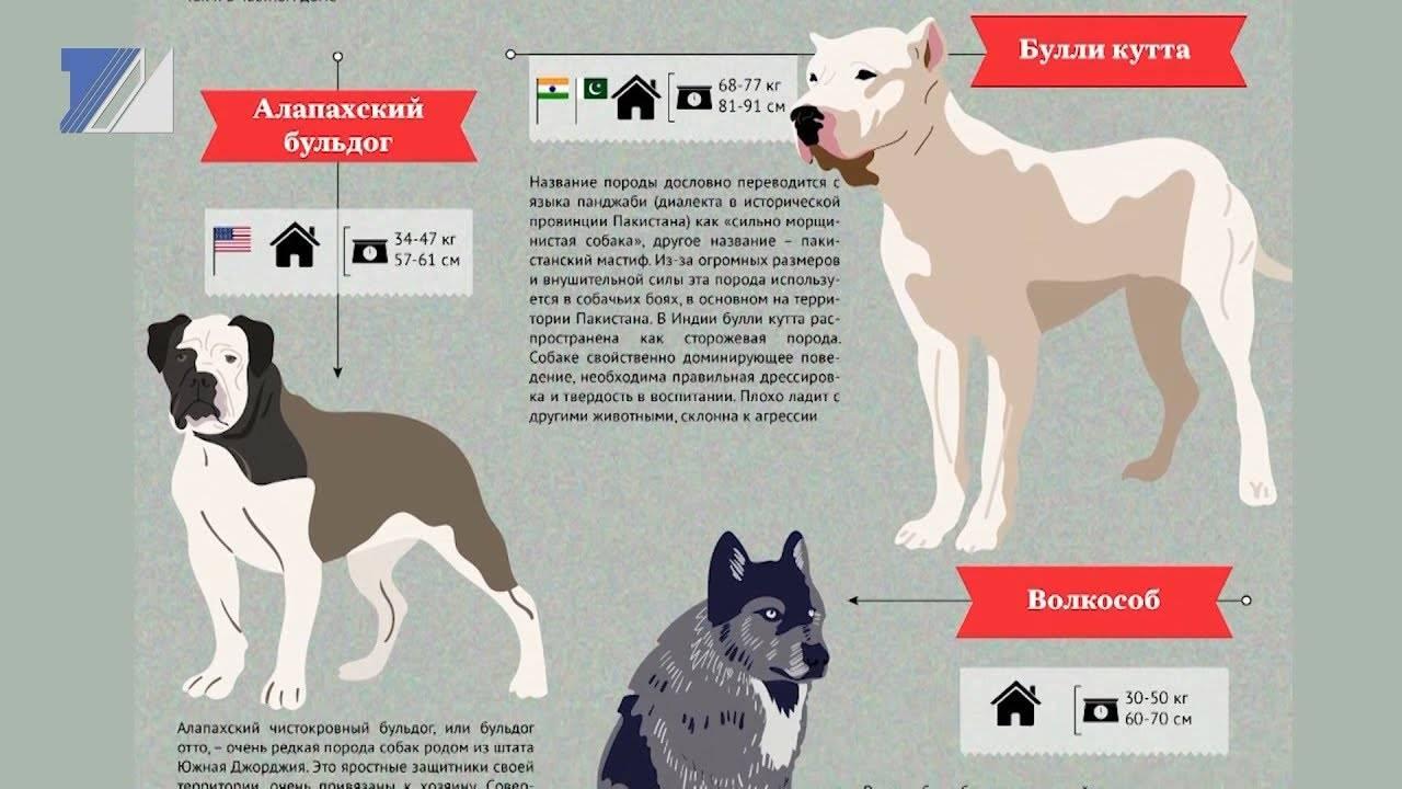 Список опасных пород собак