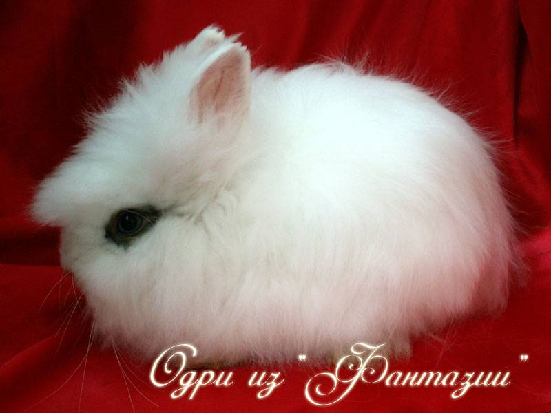 Имена для кроликов: как выбрать и приучит?