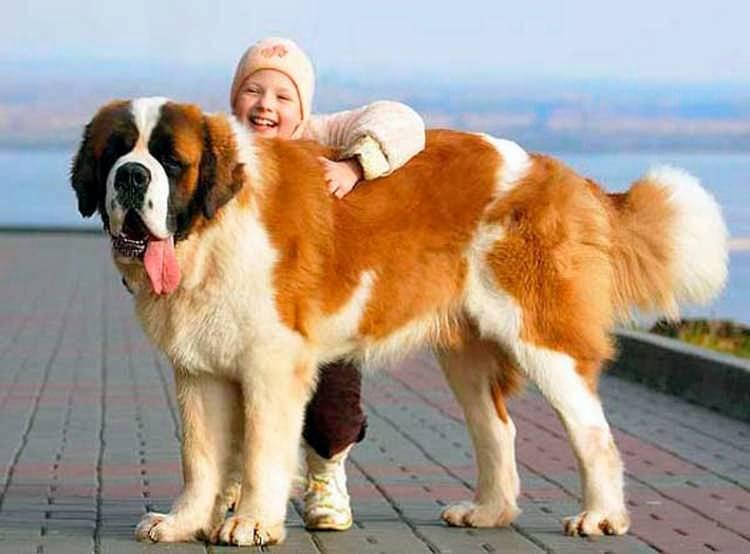 Самые добрые породы собак — виды и описание