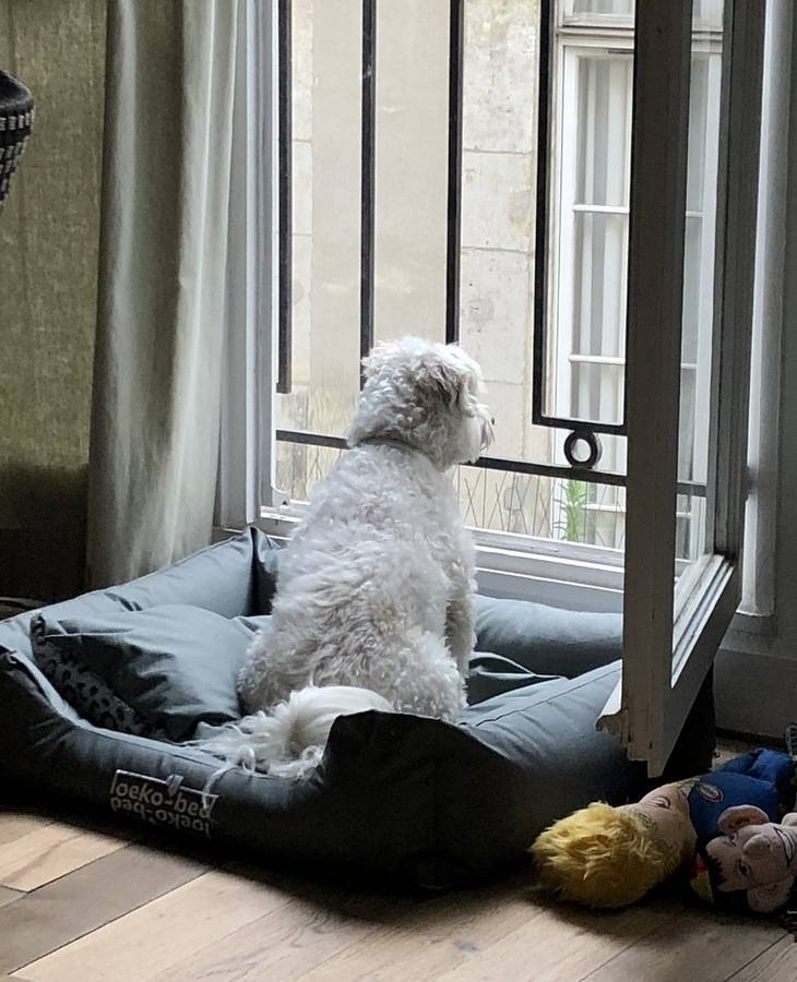 Почему собака скулит в одиночестве, и как её от этого отучить