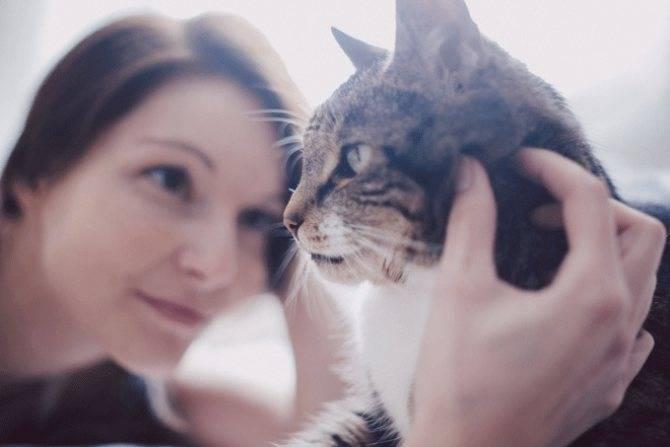 Читают ли кошки мысли и как узнать о чем они думают — 4 лапки