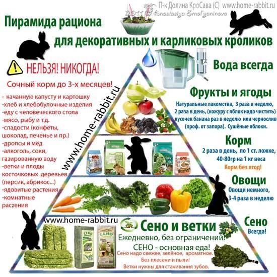 Чем нельзя кормить кроликов: список запрещенных продуктов, советы и рекомендации от специалистов