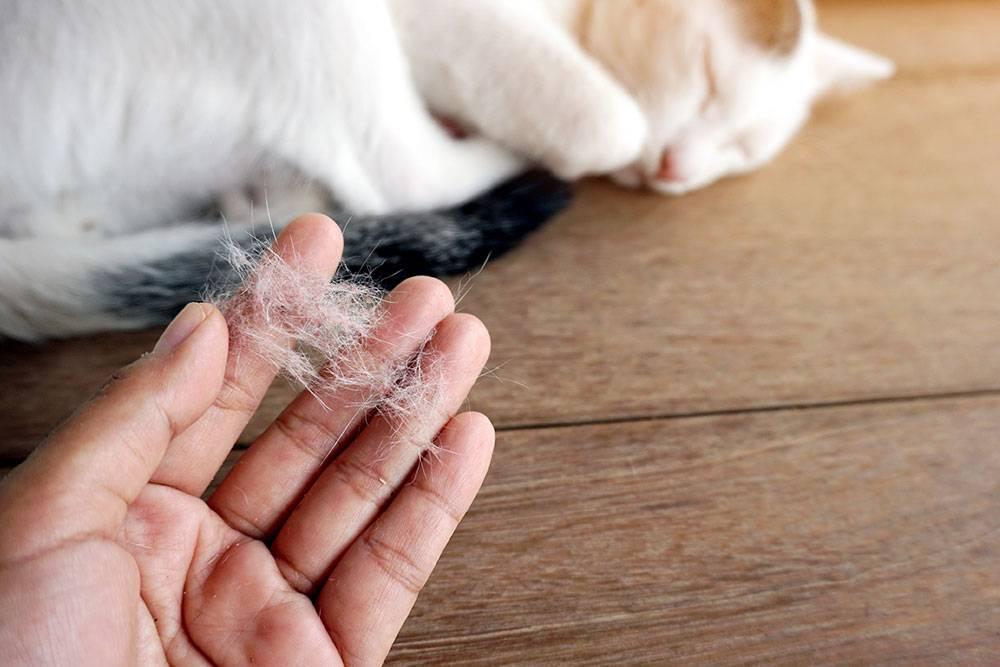 Избавляемся от шерсти любимого питомца: лучшие способы для чистки одежды