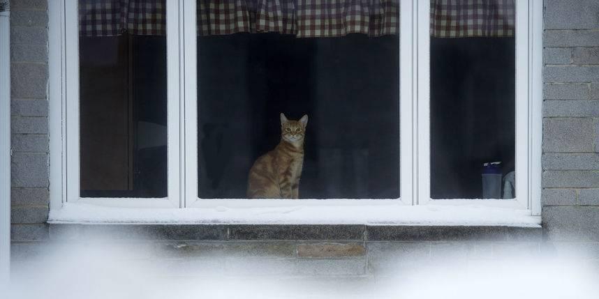 Пропал кот: как узнать, живой ли он, что делать, если кошка потерялась, почему животное уходит из дома