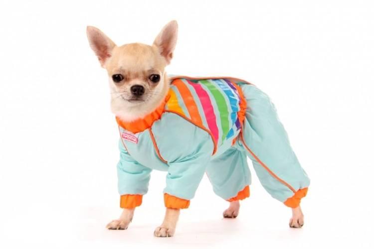 Как подобрать одежду для собаки под конкретную породу