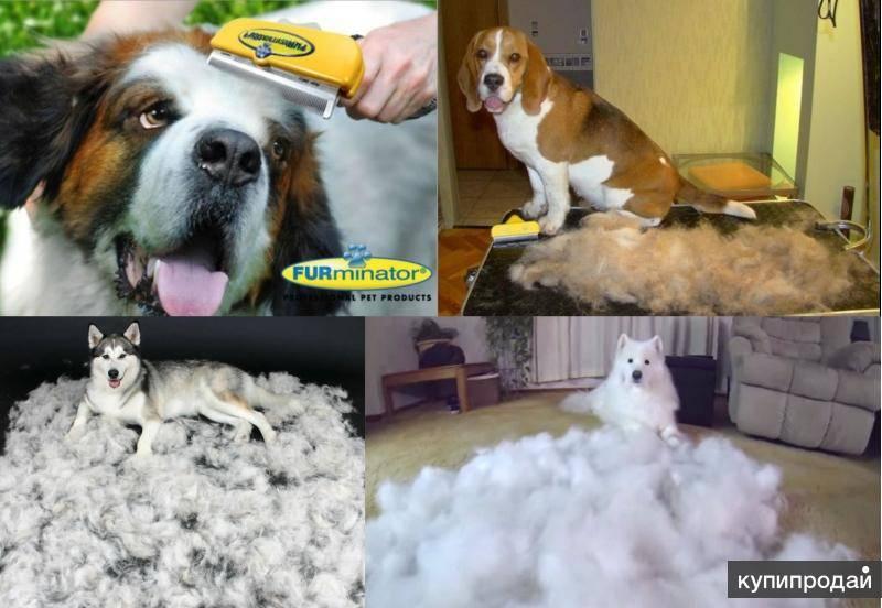 Причины появления линьки у собаки: когда и как она происходит, как вычесывать пса