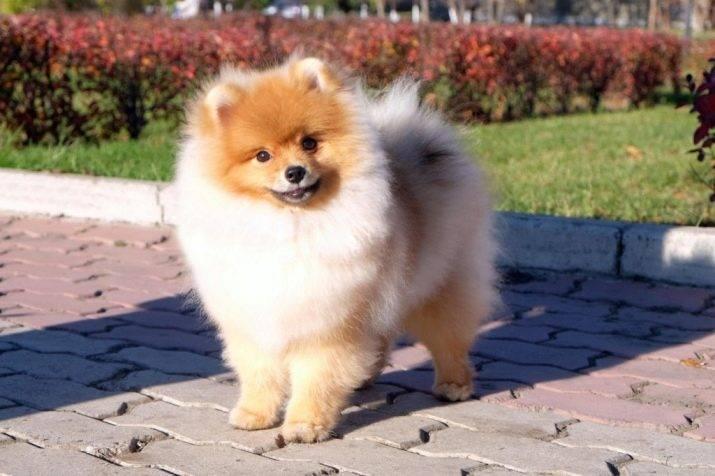 Клички для собак мальчиков: прикольные, смешные, иностранные, красивые имена