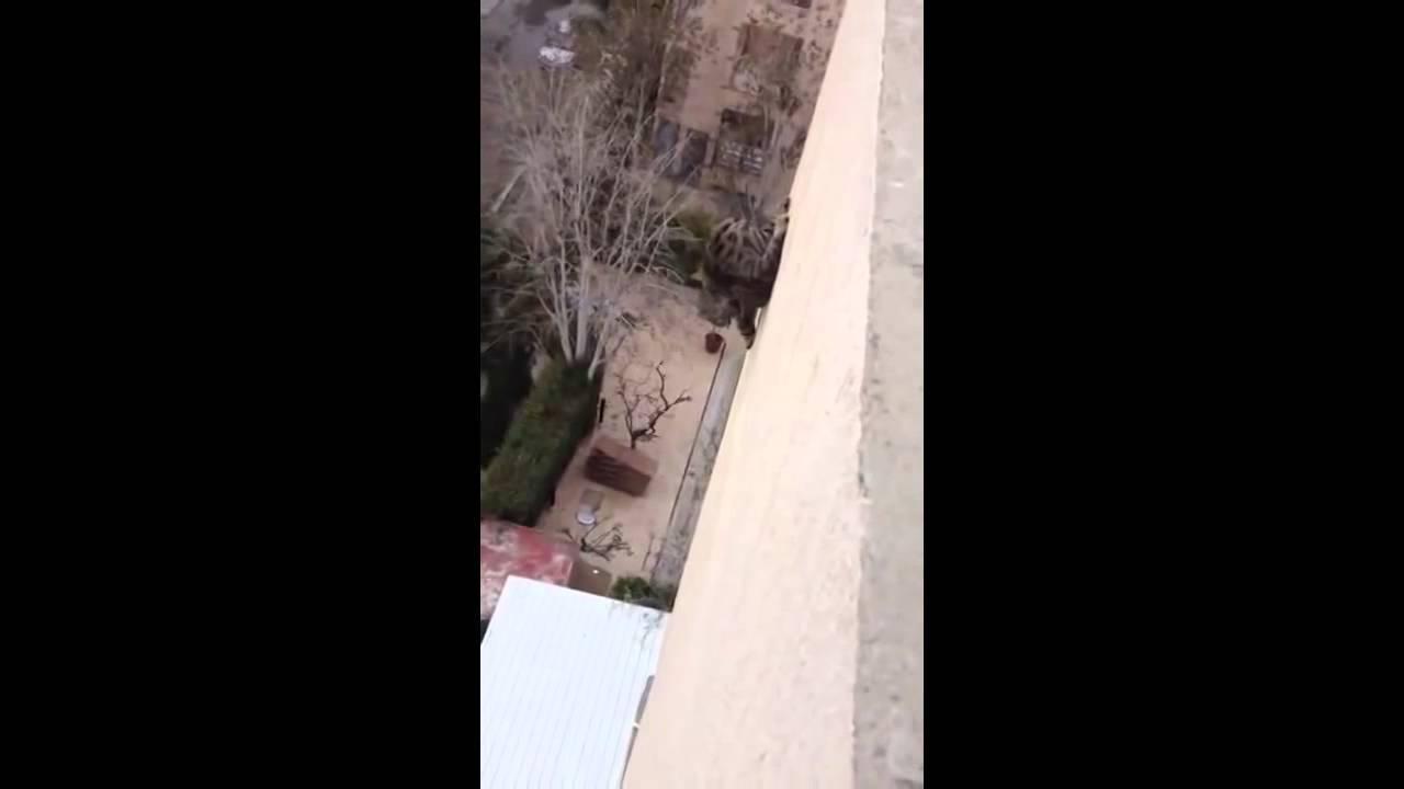 Падение с высоты кошки или кота - что делать, если кошка упала из окна?  | caticat.ru