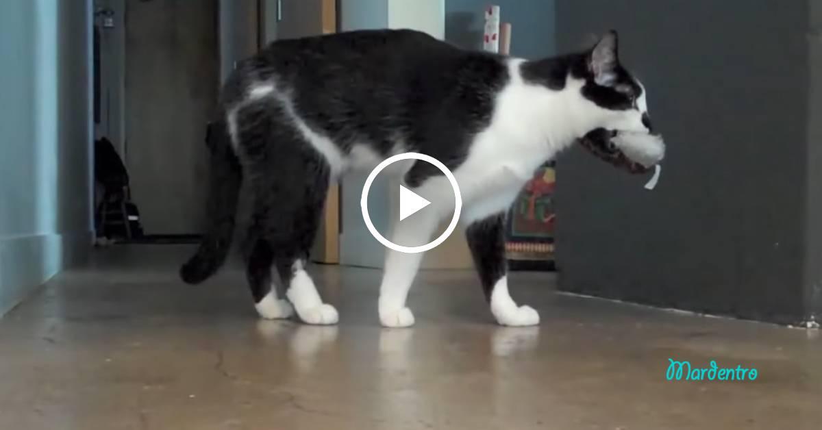 Скучают ли кошки по хозяевам, оставаясь одни дома?