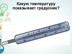 Нормальная температура у кошек 38-39 градусов: как измерить и что делать?