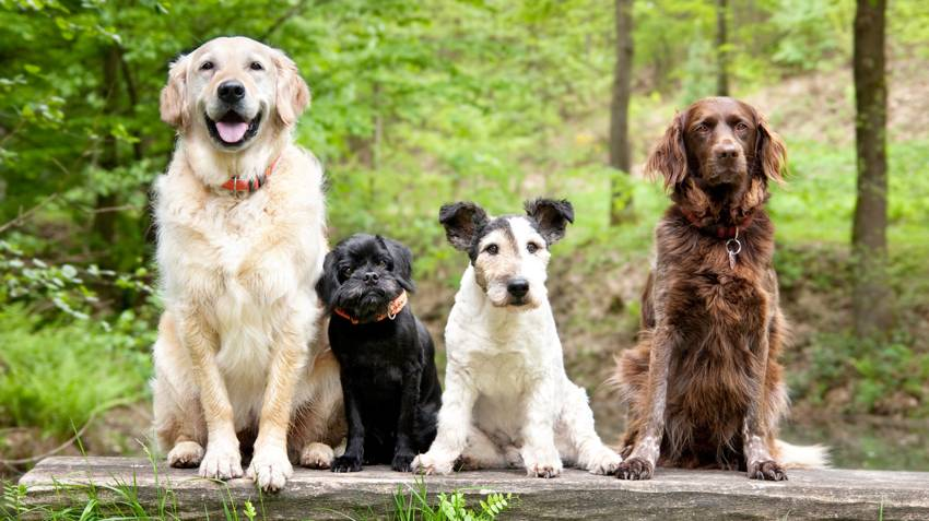 11 пород собак не подходящие для квартиры