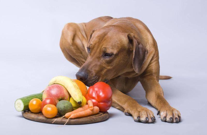 Почему собакам нельзя шоколад — последствия употребления