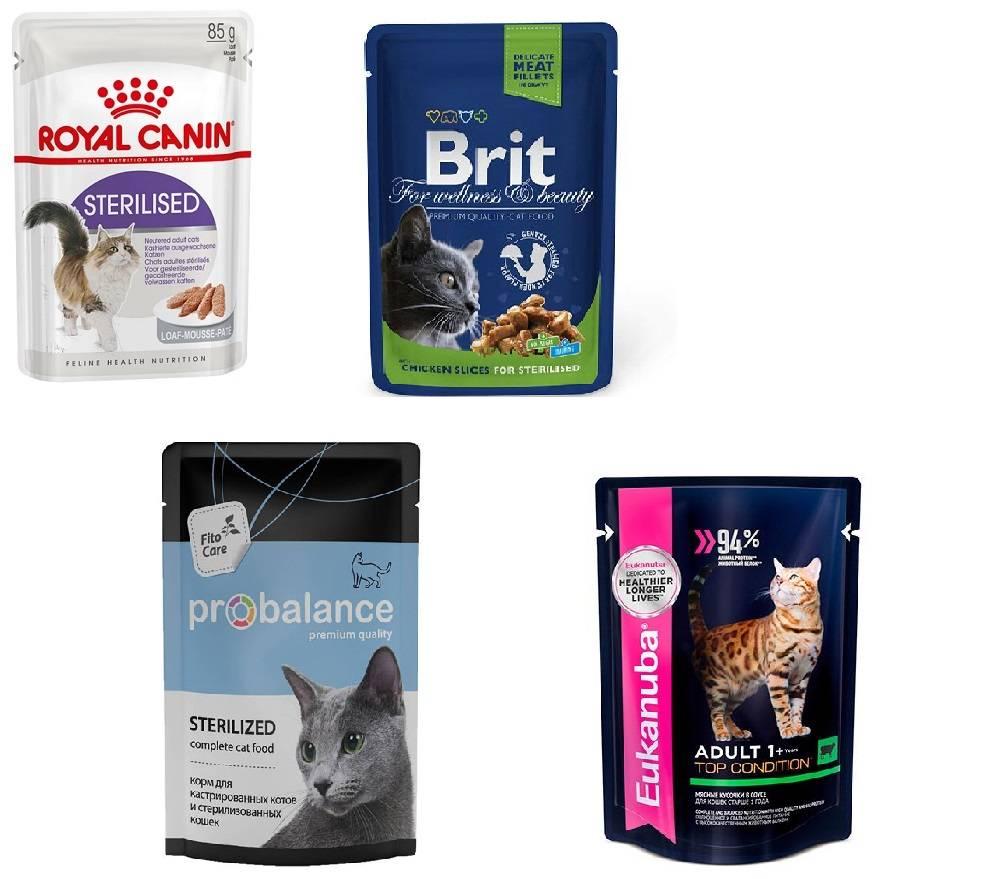 Сухой корм для кошек: рейтинг лучших по мнению ветеринаров