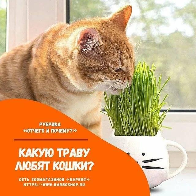 Зачем кошка ест траву