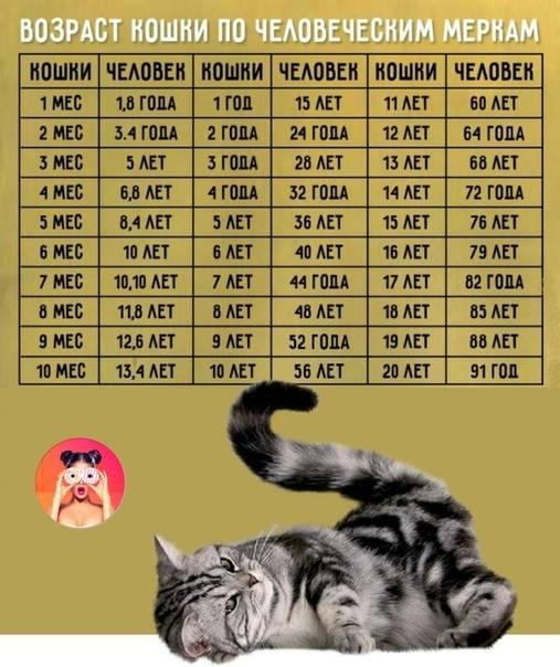 Как определить возраст кота и кошки в домашних условиях: по каким признакам узнать, сколько месяцев или лет котенку или взрослому животному