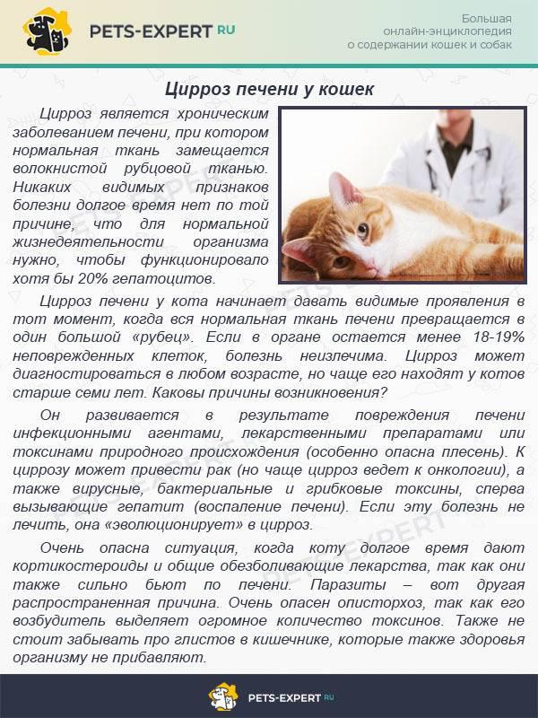Какие существуют инфекционные болезни кошек и как они проявляются