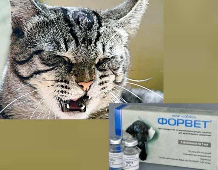 Заложенный нос у кошки когда дышит: варианты что делать в домашних условиях