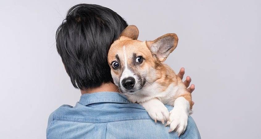 10 собачьих фобий и страхов: причины страха у собак - домашние животные