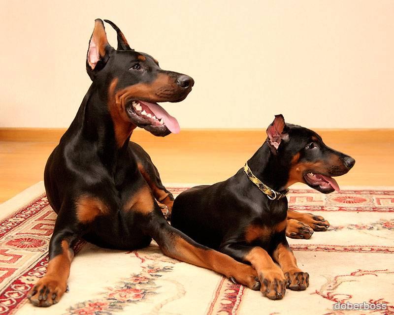 Клички для черных собак