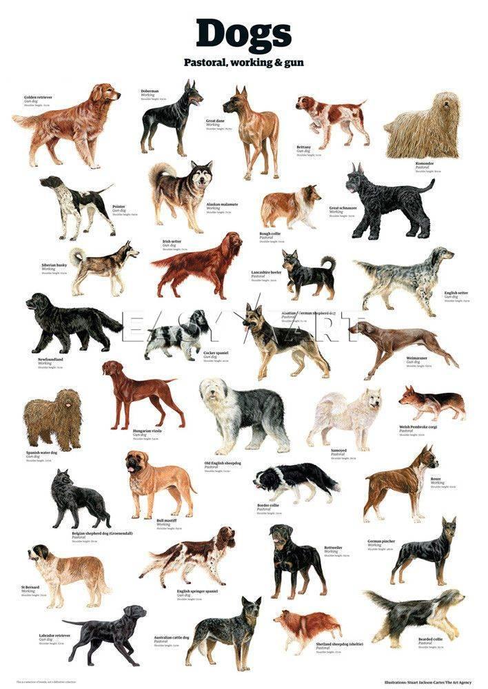 Породы собак, известные с древности