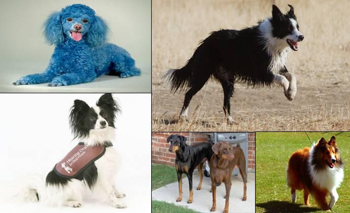 Самые маленькие породы собак в мире – названия,описания и сколько стоят щенки
