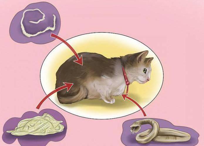Как понять, что у собаки глисты: важные детали, которые вас предупредят о болезни