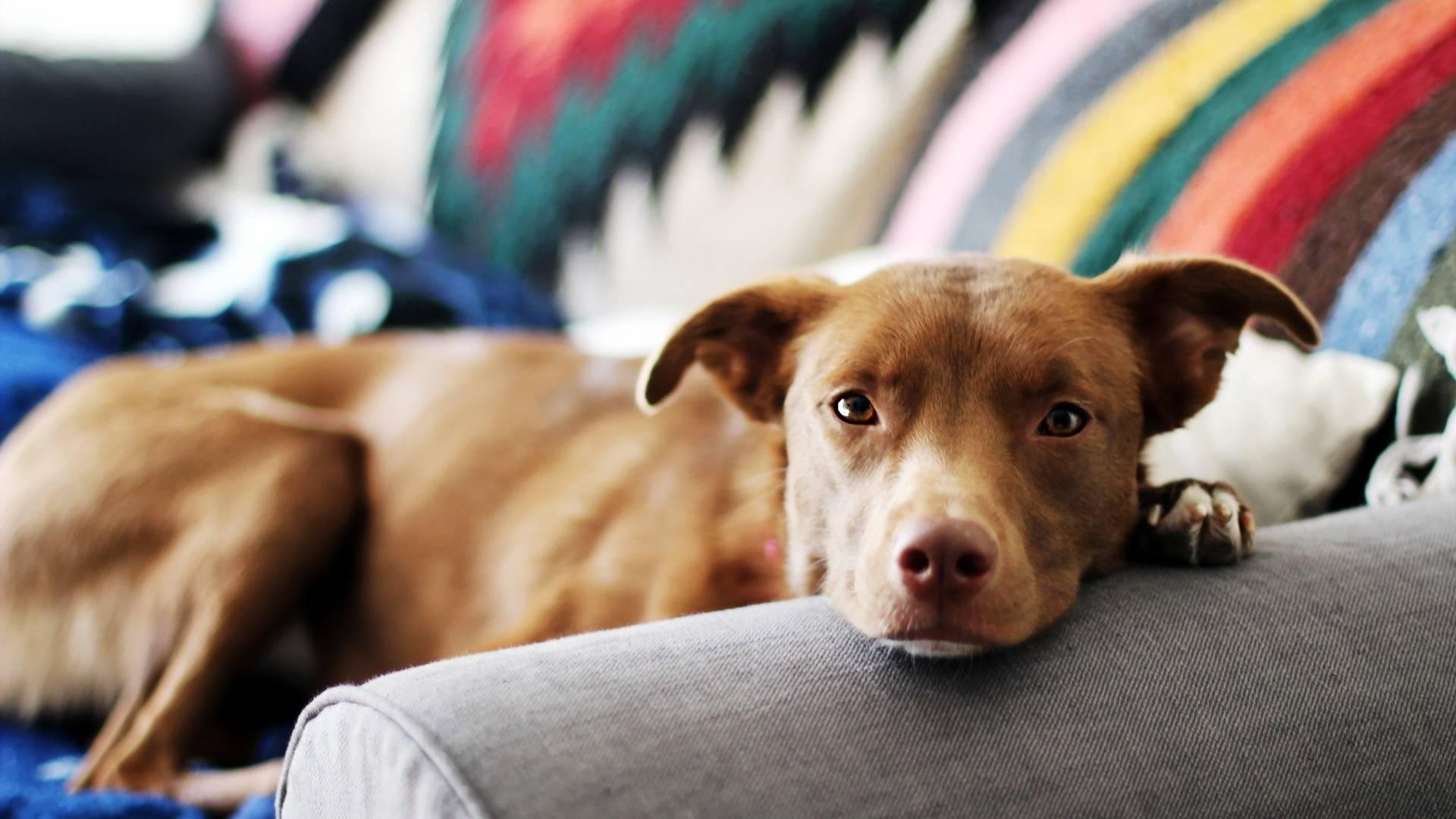 Первые дни щенка в новом доме: что делать, чтобы избежать ошибок