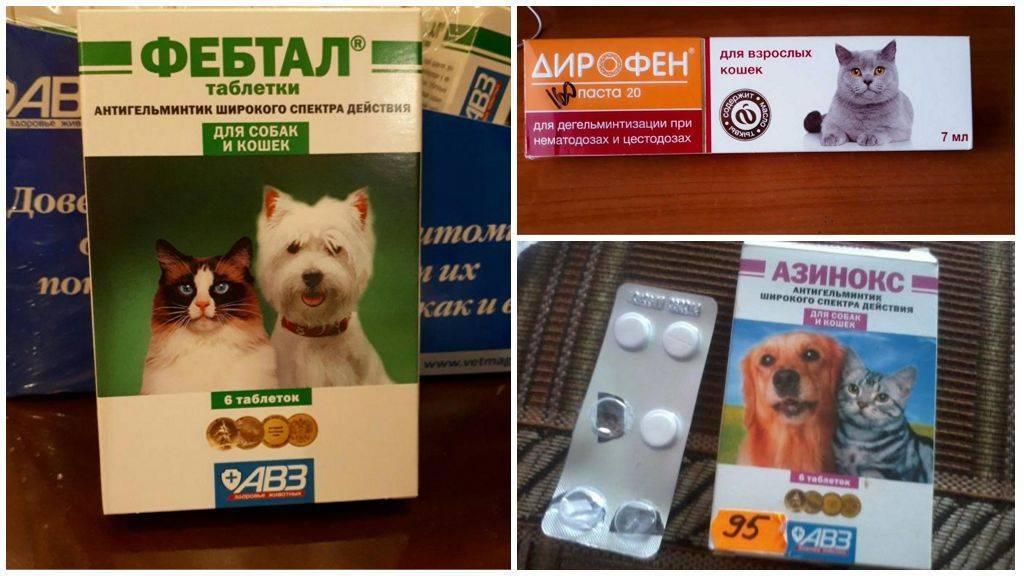 Обзор таблеток от глистов для кошек