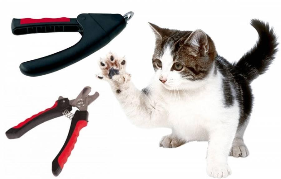 Как подстричь когти кошке: готовимся и проводим процедуру правильно