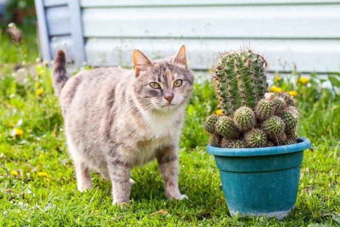 Когда и как глистогонят котят?