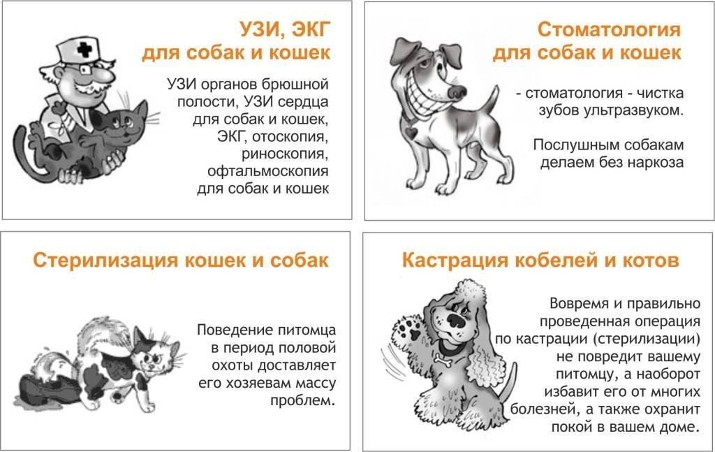 Как ухаживать за собакой правильно: советы владельцам -блог tam.by