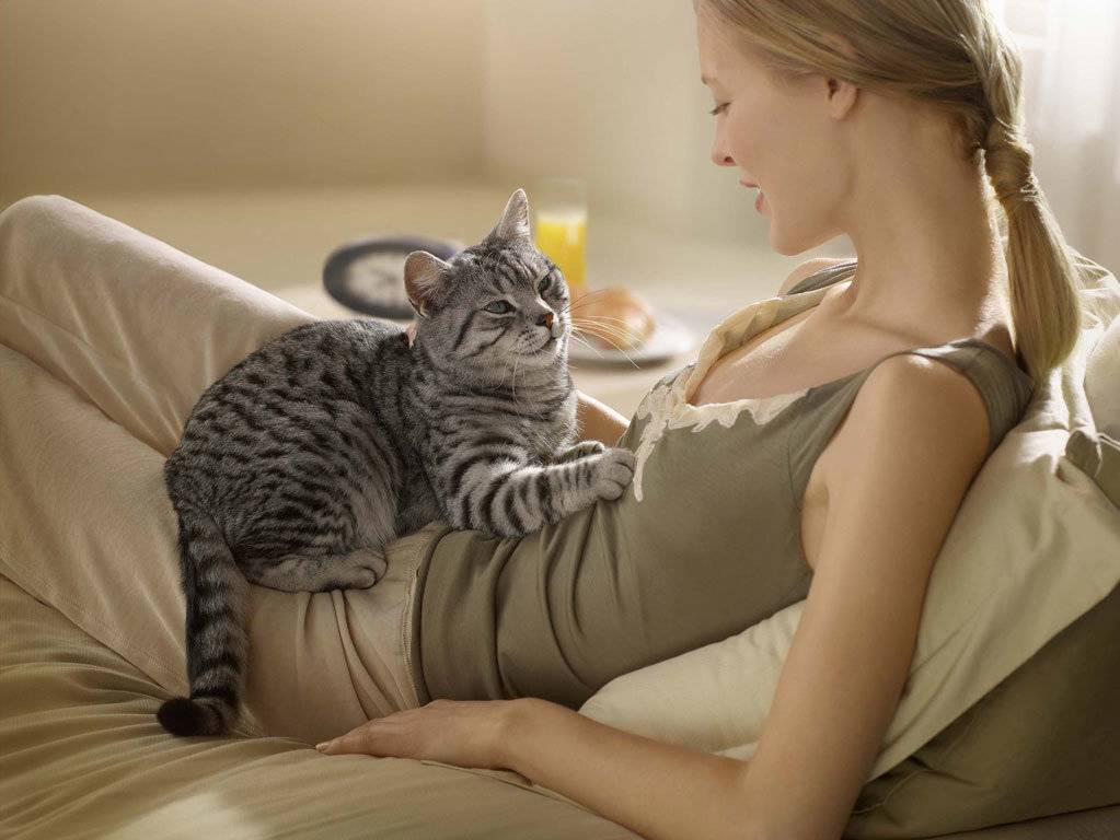 Язык кошек. почему кошки ложатся на спину при виде вас