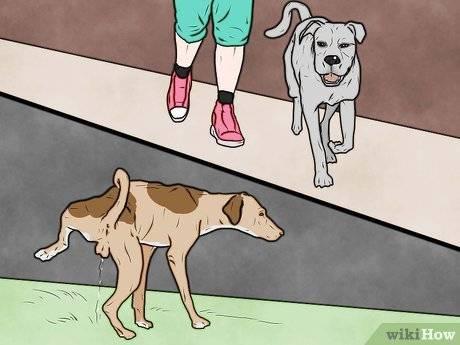 Как правильно наказывать собаку