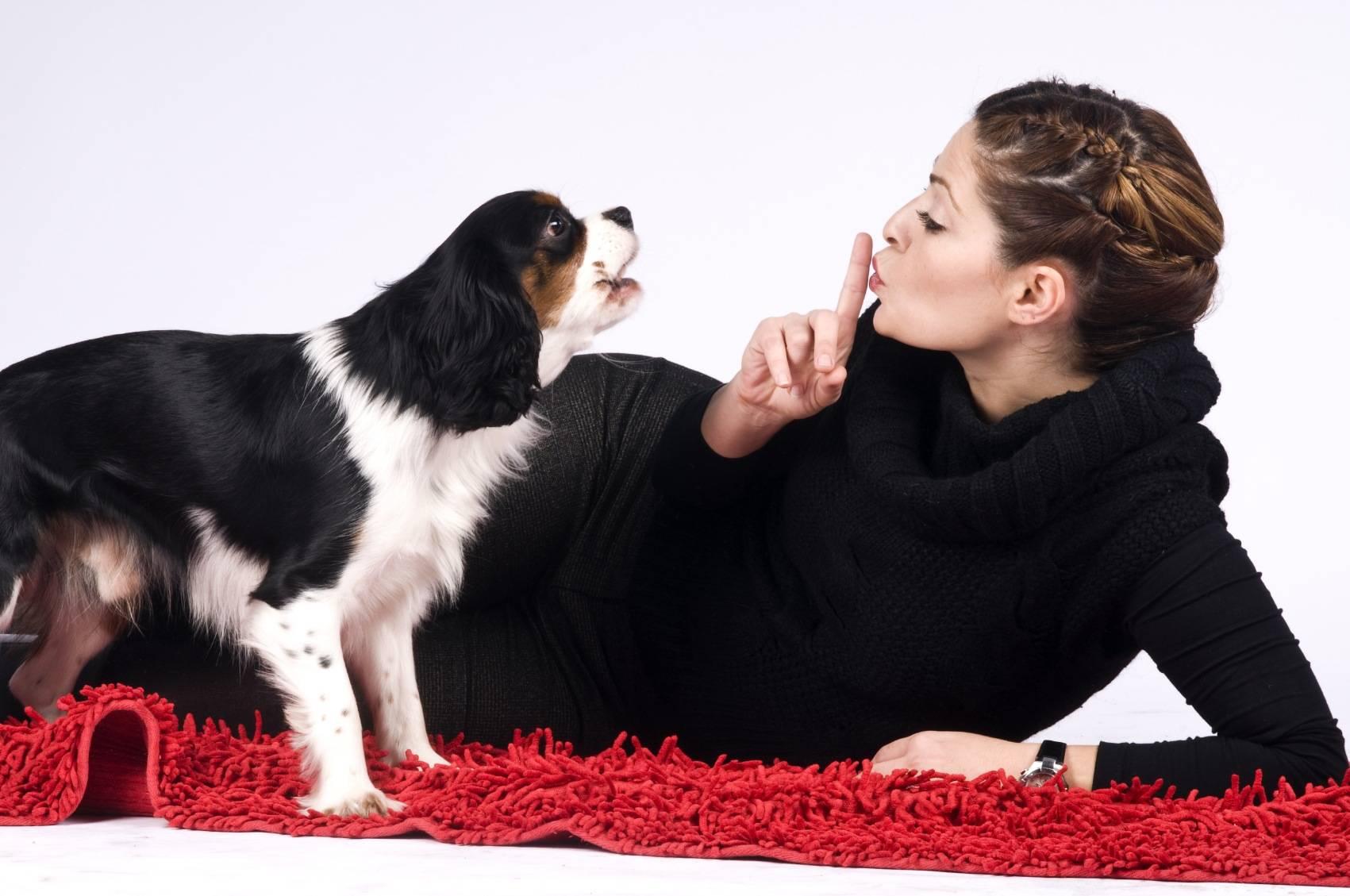 Что делать, если собака ведет себя беспокойно?