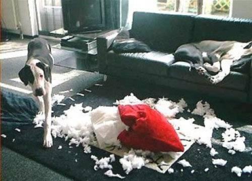 Как отучить собаку подбирать еду с земли   dogkind.ru