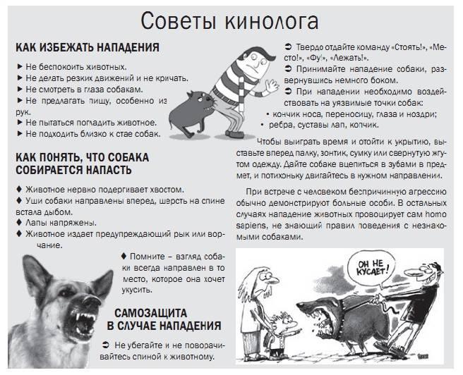 Как защитить себя от нападения собак на прогулке: поможет бутылка и не только