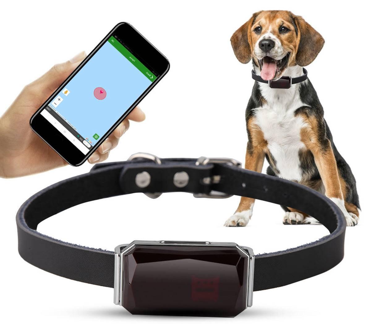 Gps-ошейник для собак: описание, модели, отзывы :: syl.ru