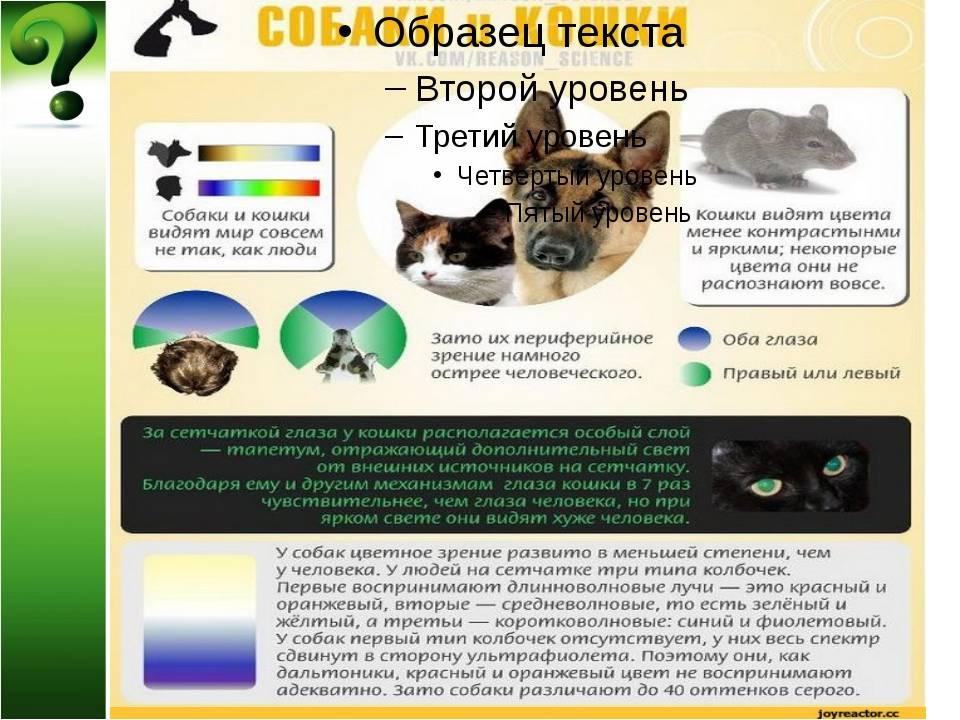 Как видят кошки: секреты и особенности восприятия животными окружающего мира