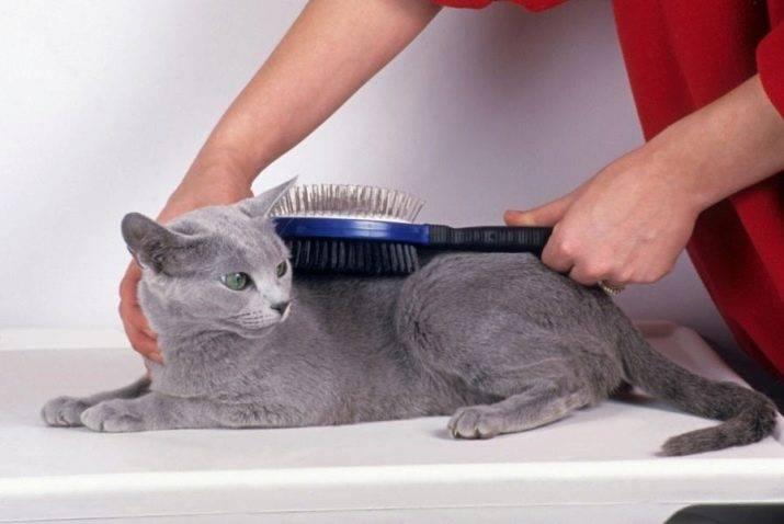 Как избавиться от шерсти кошки в квартире