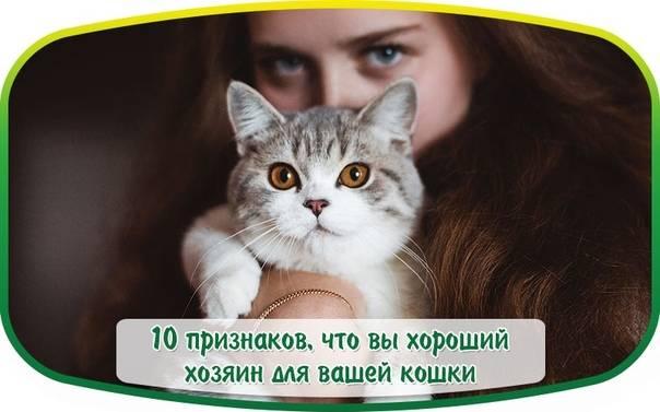 10 признаков того, что ваша котейка счастлива!