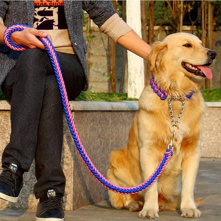 как приучить щенка к ошейнику, когда одевать ошейник щенку, собаке - dogtricks.ru