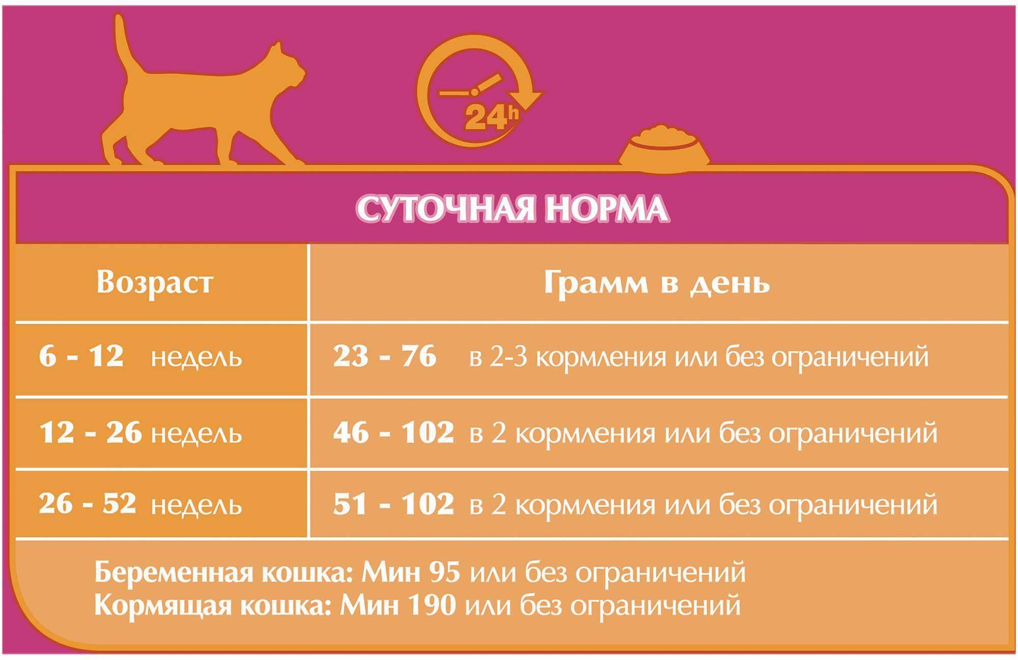 Разница корма для взрослых кошек и котят
